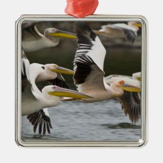 Africa. Kenya. White Pelicans in flight at Lake Christmas Ornament