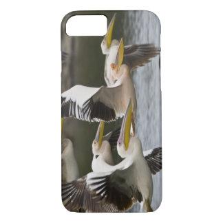 Africa. Kenya. White Pelicans in flight at Lake iPhone 7 Case