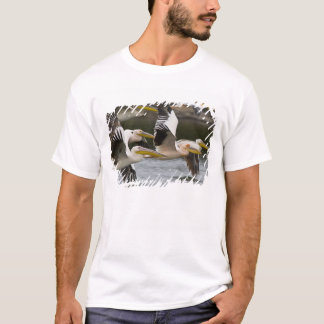 Africa. Kenya. White Pelicans in flight at Lake T-Shirt
