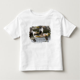 Africa. Kenya. White Pelicans in flight at Lake Toddler T-Shirt