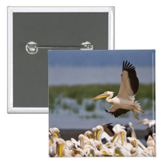 Africa. Kenya. White Pelicans on the shore of 15 Cm Square Badge