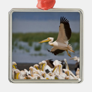 Africa. Kenya. White Pelicans on the shore of Christmas Ornament