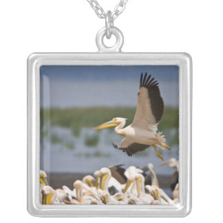Africa. Kenya. White Pelicans on the shore of Silver Plated Necklace