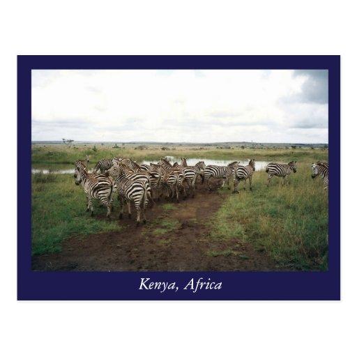 Africa Kenya wild animals Post Card