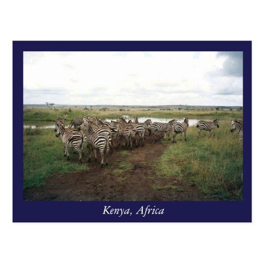 Africa Kenya wild animals Postcard