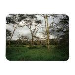 Africa Kenya wild land Vinyl Magnet
