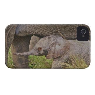 Africa, Kenya wildlife, baby elephant. iPhone 4 Case-Mate Case