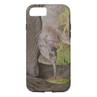 Africa, Kenya wildlife, baby elephant. iPhone 7 Case