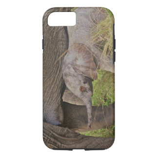 Africa, Kenya wildlife, baby elephant. iPhone 8/7 Case