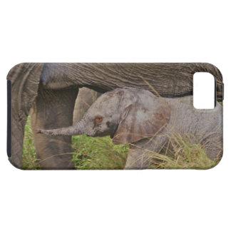 Africa, Kenya wildlife, baby elephant. Tough iPhone 5 Case