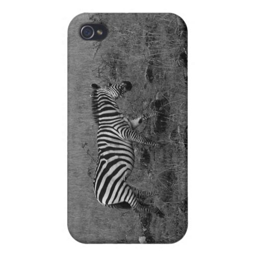 Africa Kenya Zebra in the Wild Covers For iPhone 4