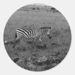Africa Kenya Zebra in the Wild Sticker