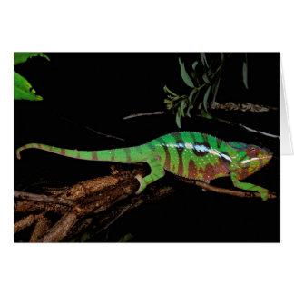 Africa, Madagascar, Ankarana Special Reserve. Card
