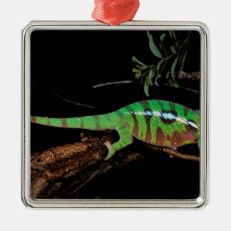 Africa, Madagascar, Ankarana Special Reserve. Christmas Ornament