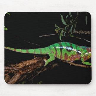 Africa, Madagascar, Ankarana Special Reserve. Mouse Mat