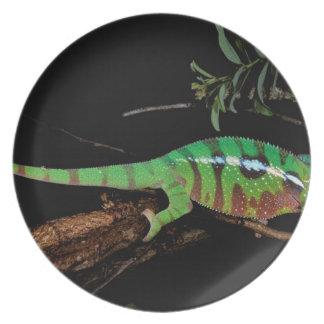 Africa, Madagascar, Ankarana Special Reserve. Plate