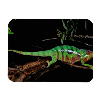 Africa, Madagascar, Ankarana Special Reserve. Vinyl Magnet