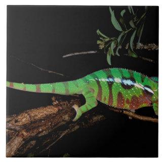 Africa, Madagascar, Ankarana Special Reserve. Tile