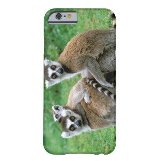Africa, Madagascar, Antananarivo, Tsimbazaza Barely There iPhone 6 Case