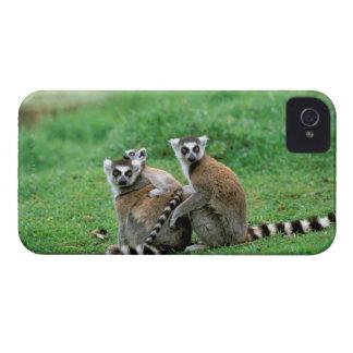 Africa, Madagascar, Antananarivo, Tsimbazaza iPhone 4 Covers