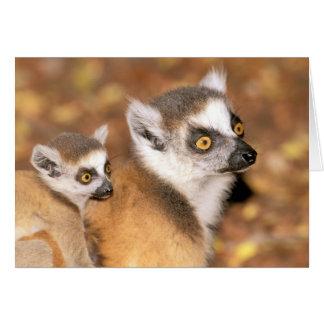 Africa, Madagascar, Berenty Private Reserve. Card