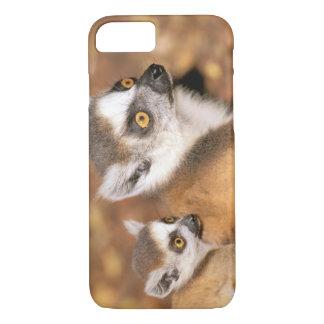 Africa, Madagascar, Berenty Private Reserve. iPhone 8/7 Case