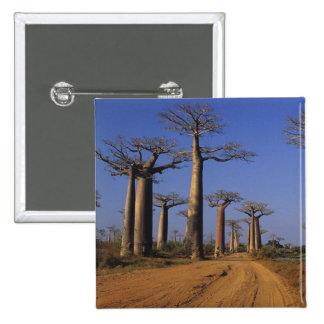 Africa, Madagascar, Morondava, Baobab Avenue. 15 Cm Square Badge
