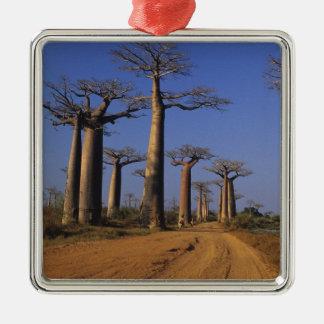 Africa, Madagascar, Morondava, Baobab Avenue. Christmas Ornament