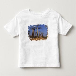 Africa, Madagascar, Morondava, Baobab Avenue. Tshirt