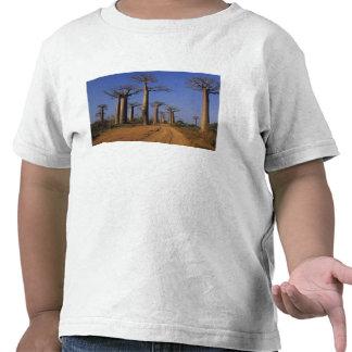 Africa, Madagascar, Morondava, Baobab Avenue. T Shirts