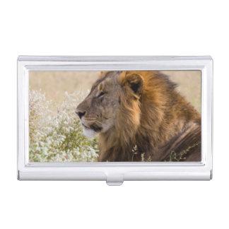 Africa, Namibia, Etosha National Park 2 Business Card Holder
