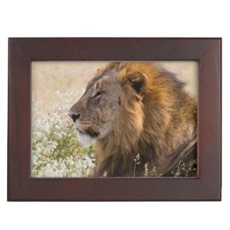 Africa, Namibia, Etosha National Park 2 Keepsake Box