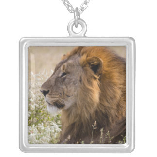 Africa, Namibia, Etosha National Park 2 Silver Plated Necklace