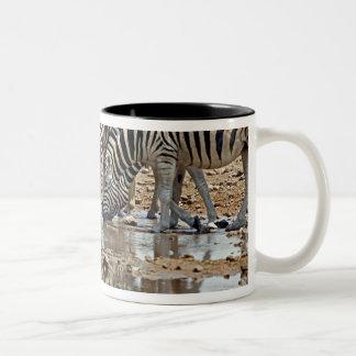 Africa, Namibia, Etosha NP. Burchell's Zebra Two-Tone Coffee Mug