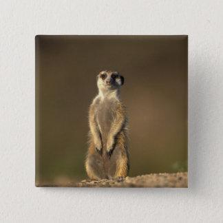 Africa, Namibia, Keetmanshoop, Meerkat (Suricate 15 Cm Square Badge