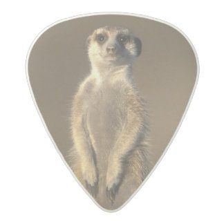 Africa, Namibia, Keetmanshoop, Meerkat (Suricate Acetal Guitar Pick