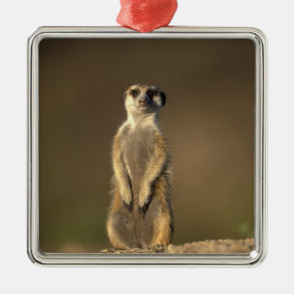 Africa, Namibia, Keetmanshoop, Meerkat (Suricate Christmas Ornament