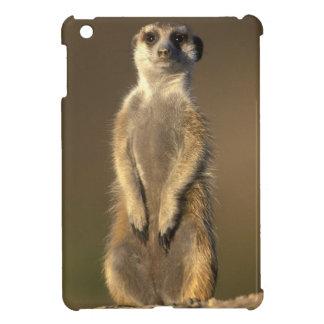 Africa, Namibia, Keetmanshoop, Meerkat (Suricate Cover For The iPad Mini