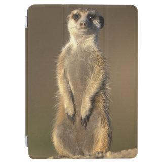 Africa, Namibia, Keetmanshoop, Meerkat (Suricate iPad Air Cover