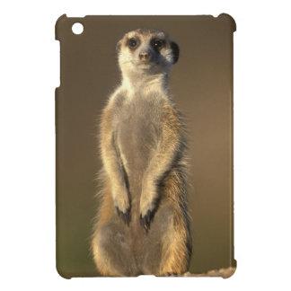 Africa, Namibia, Keetmanshoop, Meerkat (Suricate iPad Mini Cover