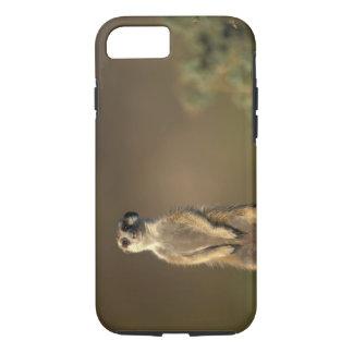 Africa, Namibia, Keetmanshoop, Meerkat (Suricate iPhone 8/7 Case