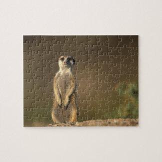 Africa, Namibia, Keetmanshoop, Meerkat (Suricate Jigsaw Puzzle