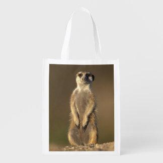 Africa, Namibia, Keetmanshoop, Meerkat (Suricate Reusable Grocery Bag