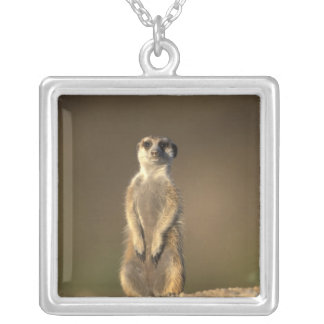 Africa, Namibia, Keetmanshoop, Meerkat (Suricate Silver Plated Necklace