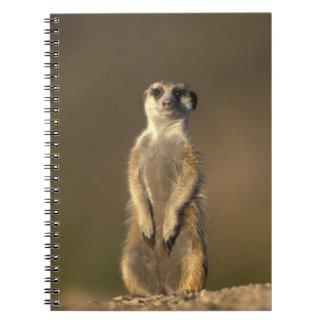 Africa, Namibia, Keetmanshoop, Meerkat (Suricate Spiral Notebook