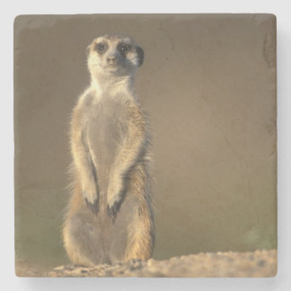 Africa, Namibia, Keetmanshoop, Meerkat (Suricate Stone Coaster