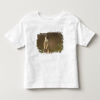 Africa, Namibia, Keetmanshoop, Meerkat (Suricate Toddler T-Shirt