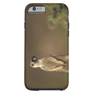 Africa, Namibia, Keetmanshoop, Meerkat (Suricate Tough iPhone 6 Case