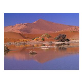Africa, Namibia. Namib-Naukluft Park. 2 Postcard