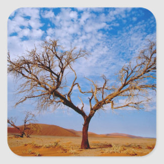 Africa, Namibia, Naukluft National Park, Square Sticker